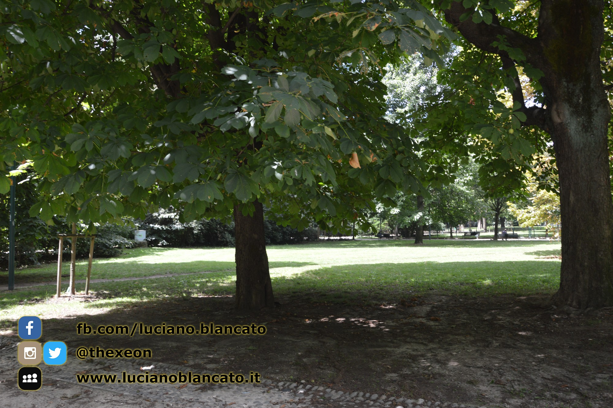 Milano - Parco sempione - stagno