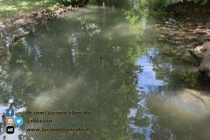copy_3_Milano - Parco sempione - stagno