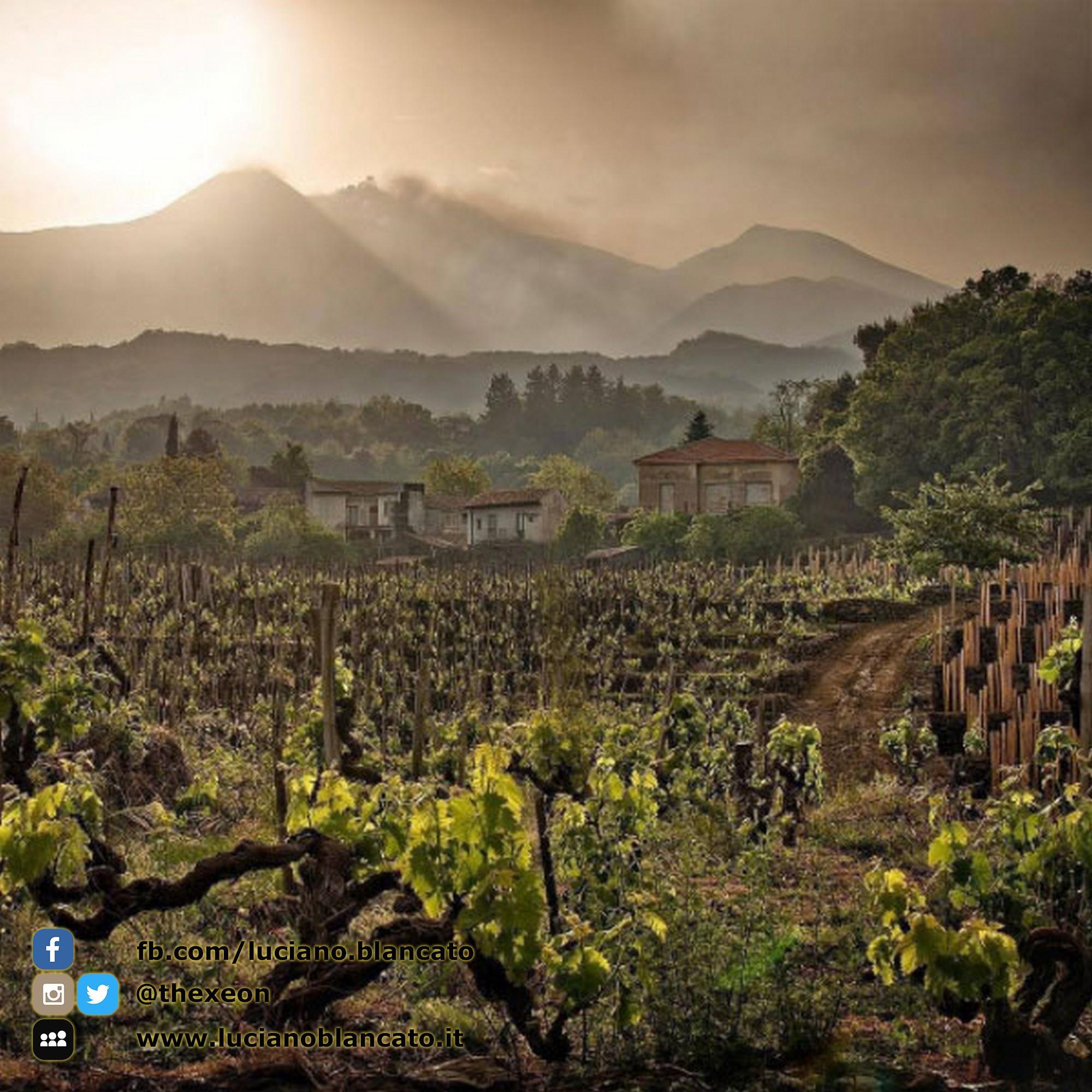 ViniMilo 37a edizione - Vista dell Etna