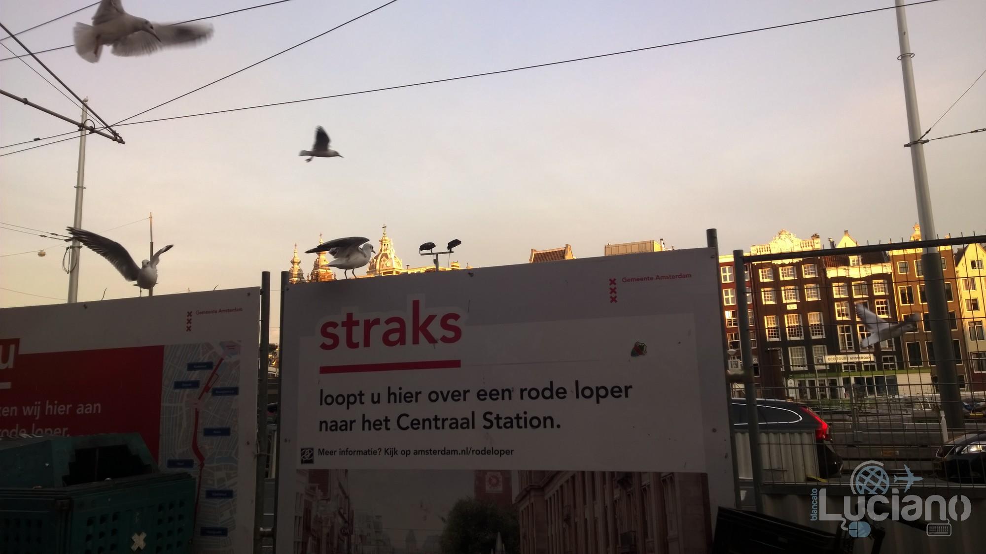 amsterdam-2014-vueling-lucianoblancatoit (21)