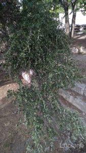 atene-vueling-lucianoblancato (85)