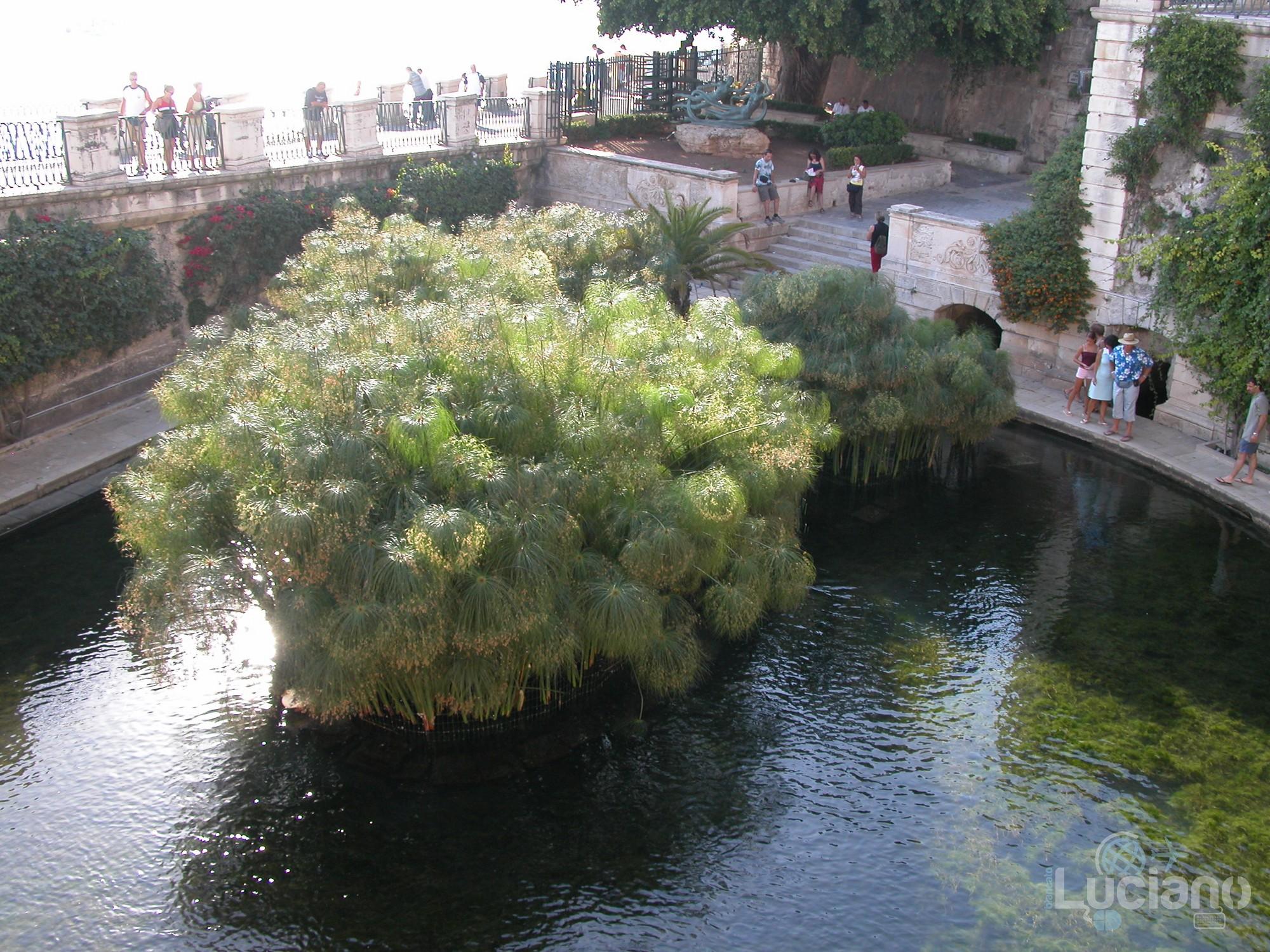 Papiri e Fonte Aretusa - Ortigia - Siracusa