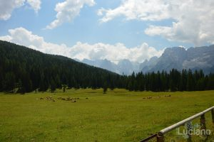 Vista, prati e bestiame In giro per il Lago di Misurina - Malga - Veneto