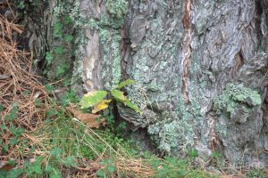 Parco naturale dell'etna - Italia - dettaglio muschio