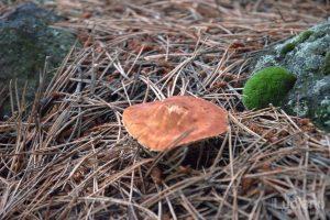 Parco naturale dell'etna - Italia - dettaglio funghetti