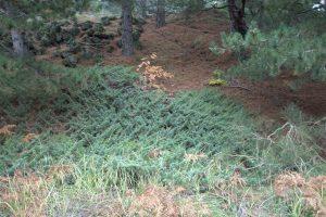 Parco naturale dell'etna - Italia - dettaglio vegetazione