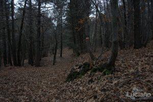Parco naturale dell'etna - Italia