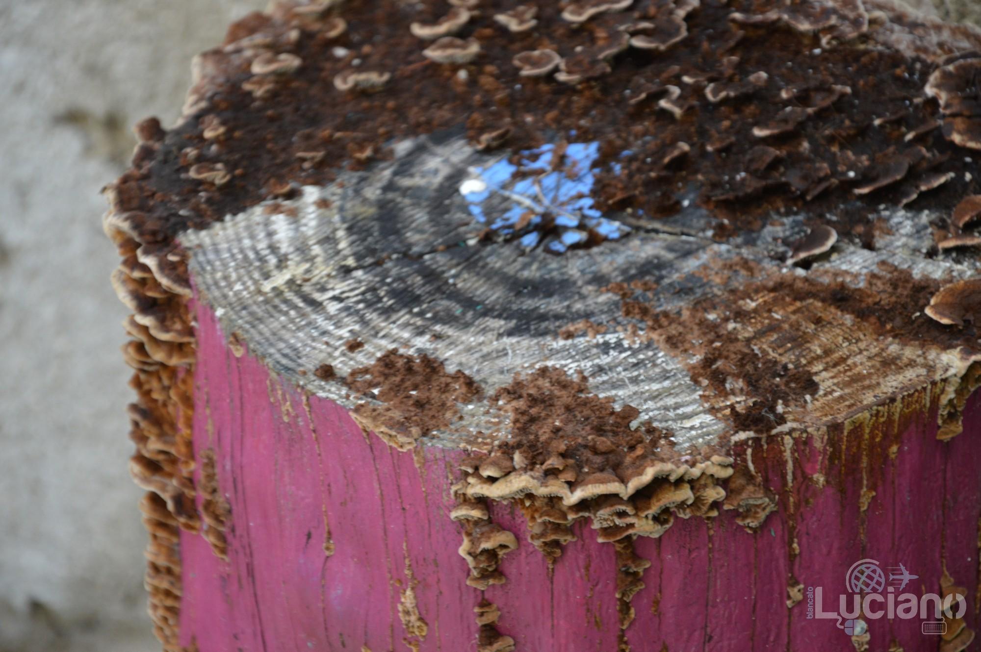 Ceppo pieno di funghi presso il Farm Cultural Park a Favara (AG)