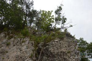 castello-di-dracula-castello-di-bran-luciano-blancato (17)