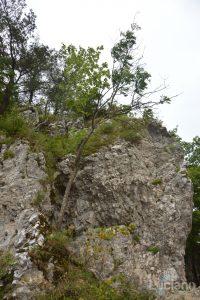 castello-di-dracula-castello-di-bran-luciano-blancato (18)