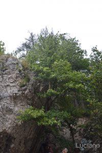 castello-di-dracula-castello-di-bran-luciano-blancato (23)