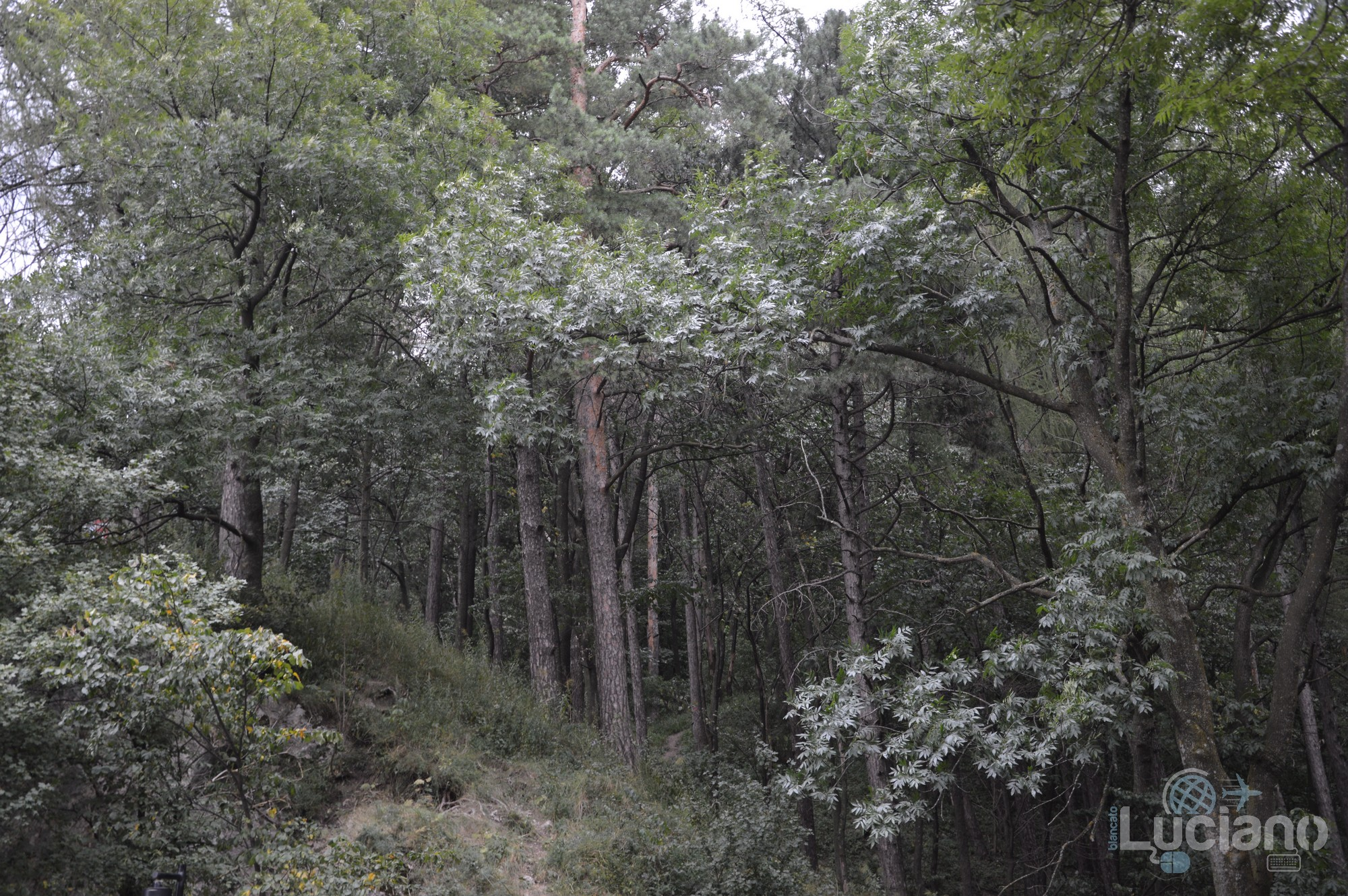 castello-di-dracula-castello-di-bran-luciano-blancato (27)