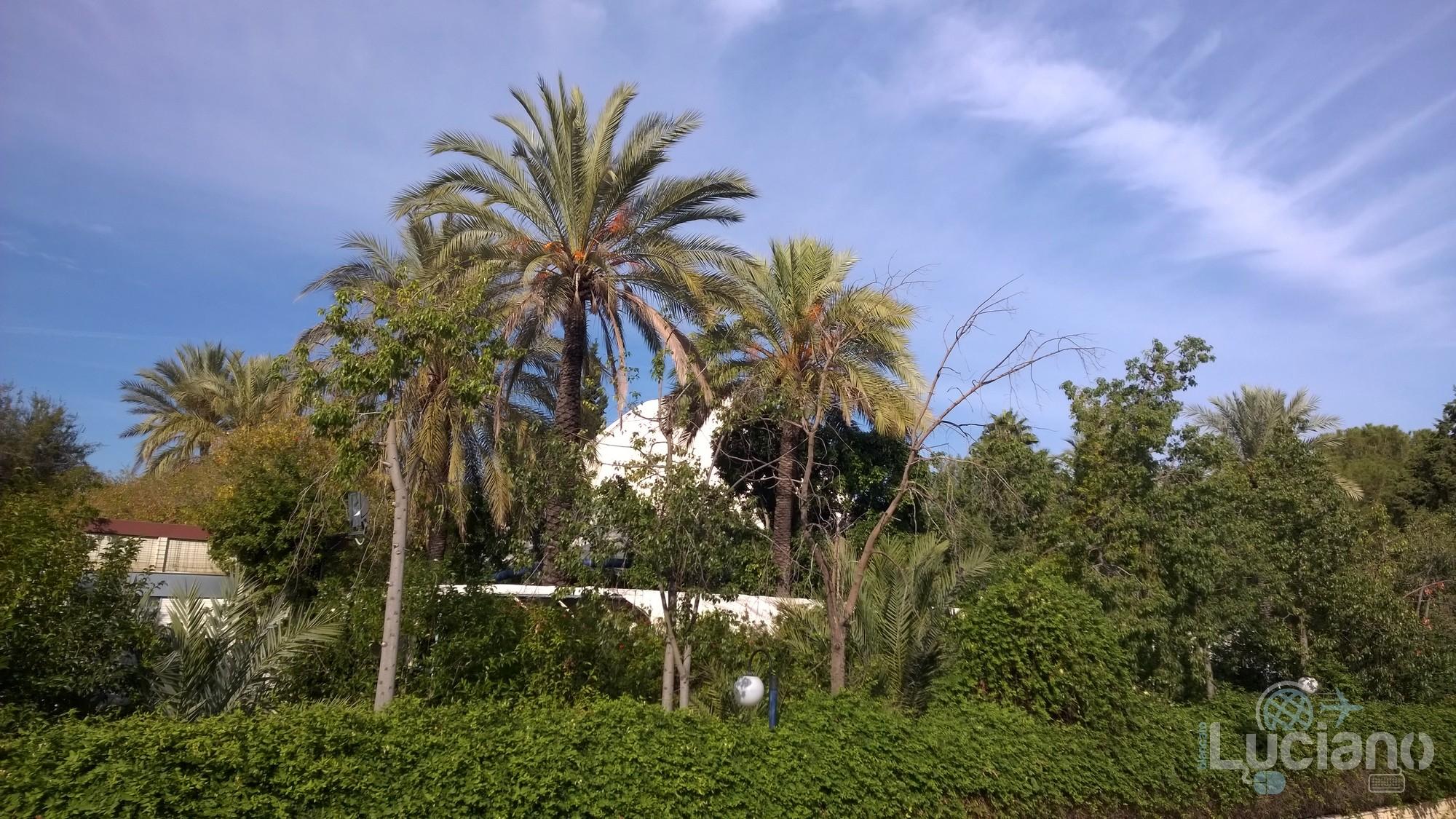 siviglia-luciano-blancato (31)