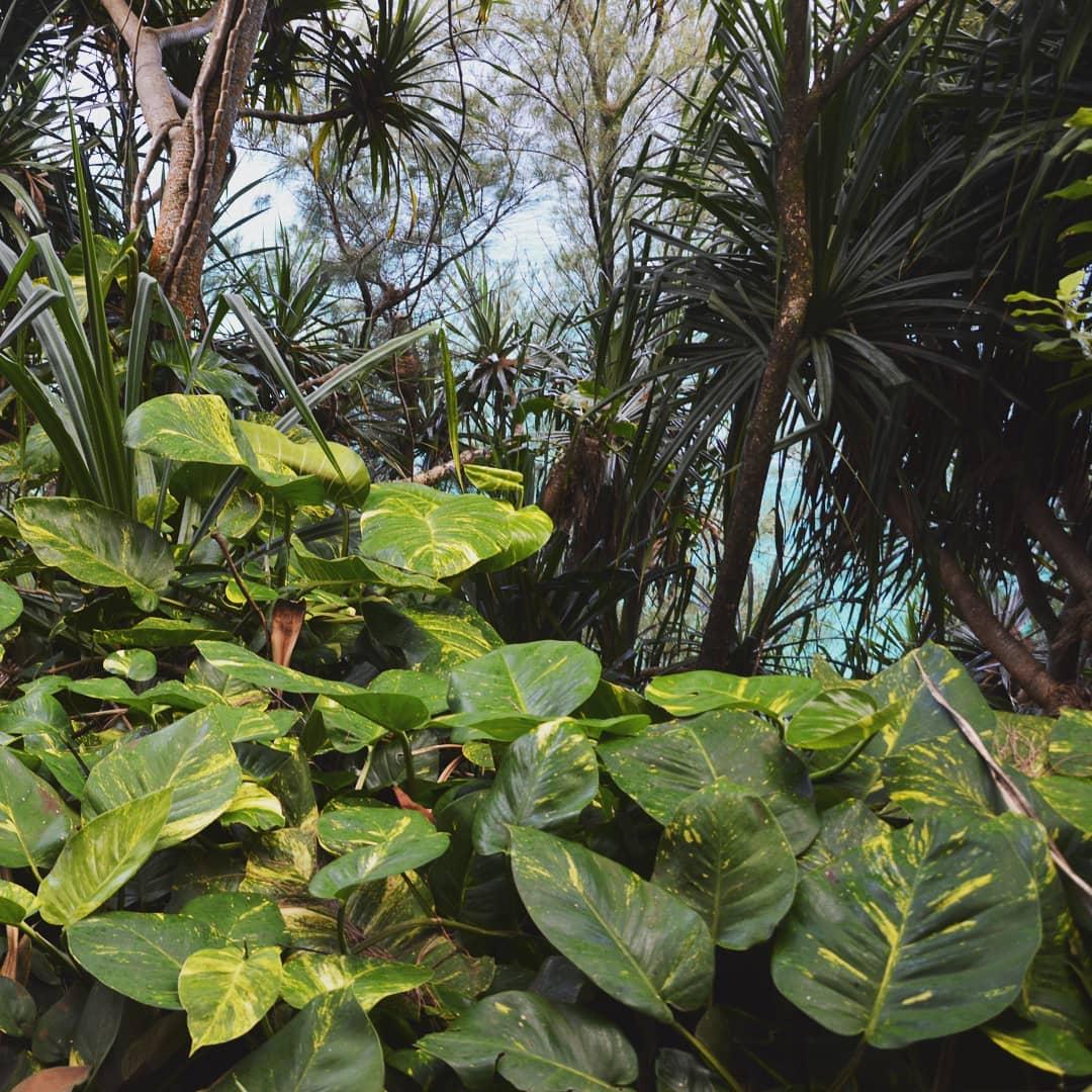 Quando vai in quest'isola ci lasci un pezzo di cuore! ️Stasera vi lascio con i colori di Kauai (più precisamente del Kalalau Trail), una delle Isole delle Hawaii.#kauai #oahuhawaii #instagood #kona #adventure #hula #art #photooftheday #hilo #usa #ohana #music #travelphotography #beautiful #hawaiitrip #diving #waves #kauaihawaii #life #livealoha #tropical #kailua #repost #beachlife #mauihawaii #kalalautrail #bigislandhawaii #wanderlust #explore #ig - from Instagram